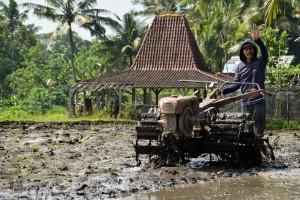 saskia van dam indonesië